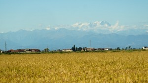 Near-Vercelli-rice-field-and-Monte-Rosa